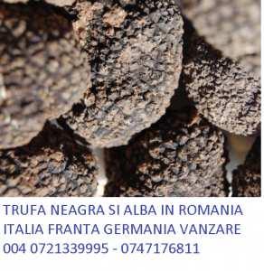trufe-romania-0721339995-truffe-romania-0747176811-vanzatre-trufe-7-Copy-Copy