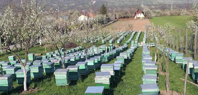 apicultura, stupi, apicultor, albine