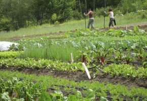 bune practici in ferma eroziunea solului