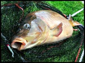 ferme piscicole