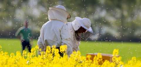 fonduri-europene-pentru-apicultura-640x330