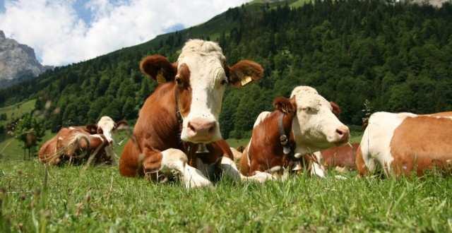 subventie-bovine-640x330