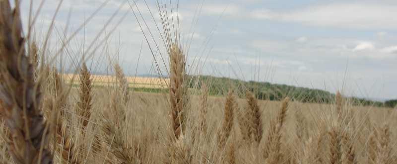 top-mari-fermieri-romania