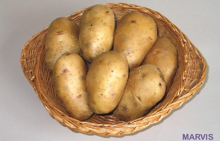 Marvis cartof