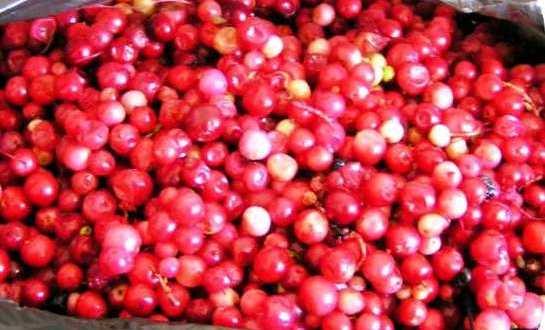fructe-padure-proaspete