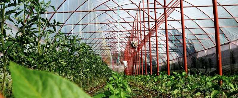 solarii robert popescu legume