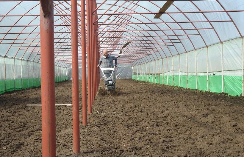 solarii robert popescu legume2