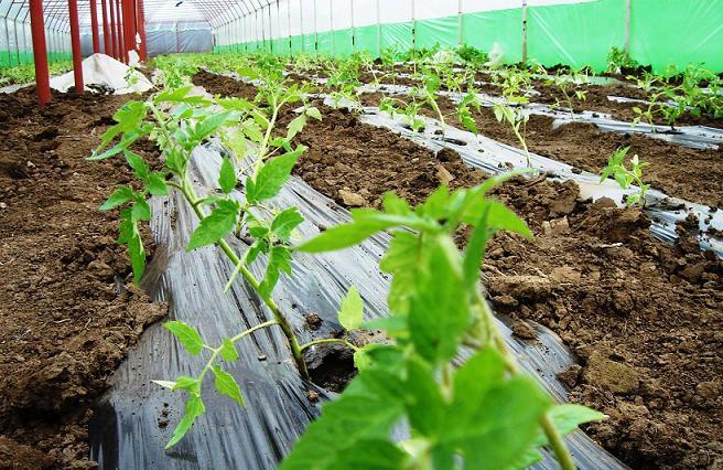 solarii robert popescu legume4
