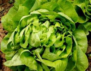 salata-verde-touareg