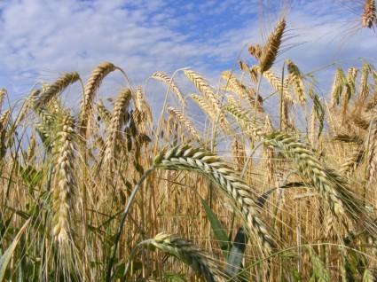 Cerere-teren-agricol1