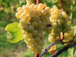vin de vanzare