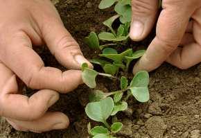 Sursa foto: harvesttotable.com