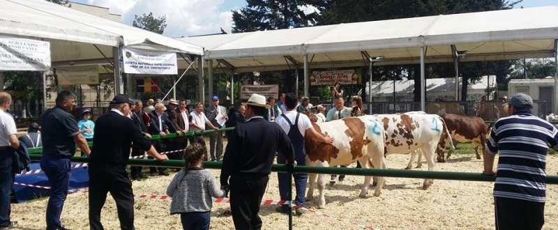 agro expo transilvania 2016