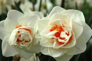 Flower-drift