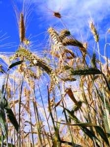 Vindem-Terenuri-Agricole-10