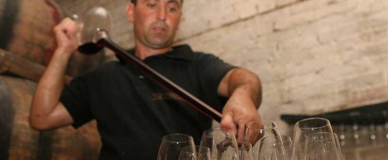 distilare vinicol, viticultura, vin
