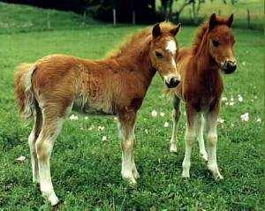 loc-de-munca-ferma-ponei-germania1
