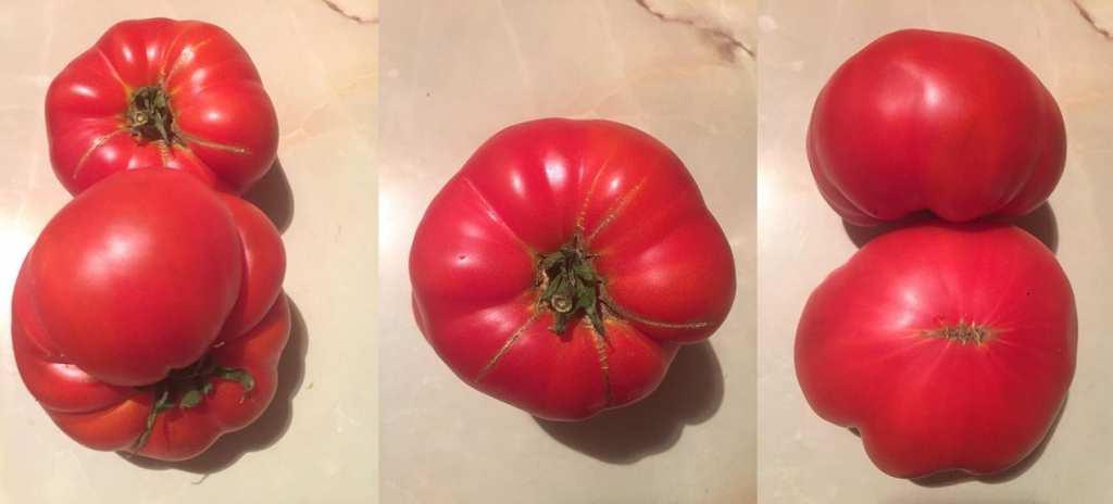 tomate inima de bou 2