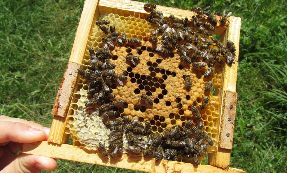 apicultura2
