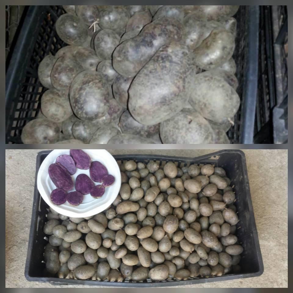 cartofi mov