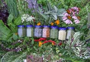 plante-aromatice2