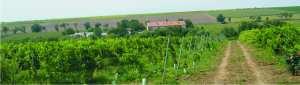 nicoresti-site-banner