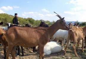 ferma capre2