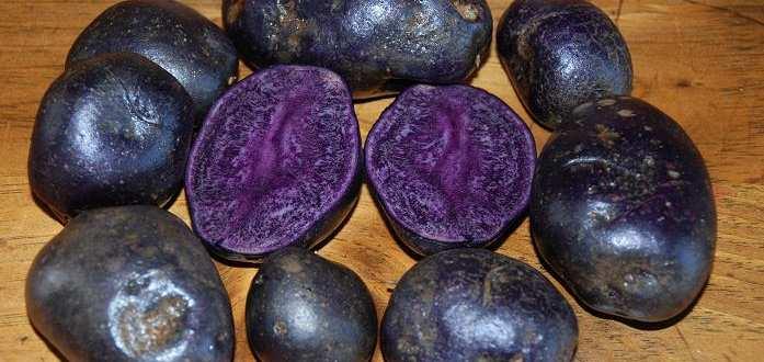 Purple_Majesty cartof mov