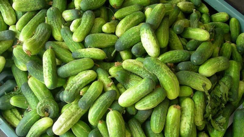 leaseri în legume varicoase