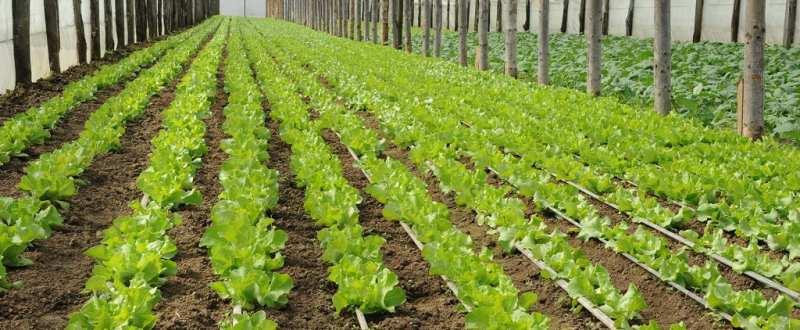 cooperativa, legume, solar