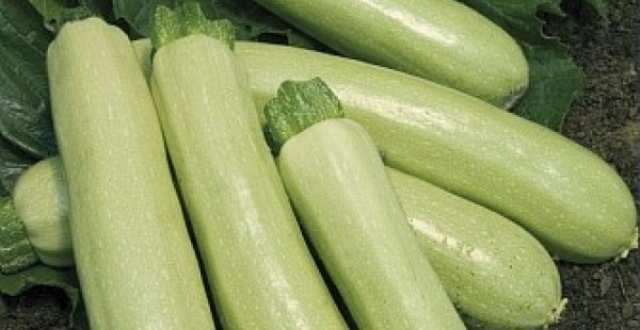 seminte-de-legume-dovlecel-adrielle-f1