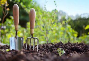 sfaturi-de-gradinarit-pentru-incepatori-gardening-tips-for-beginners
