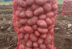 179329667_4_1000x700_cartofi-agro-si-industrie