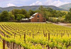 producatori vin
