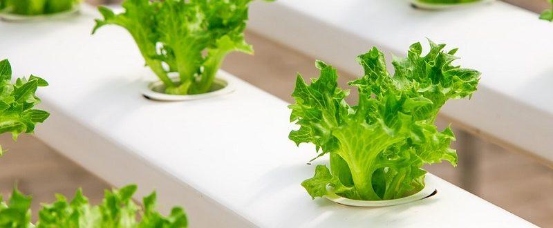 poza reprezentat. legume