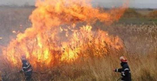 foc vegetatie