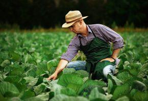 fermier