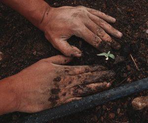 submasura 6.1 sprijin tineri fermieri, tanar fermier, reinnoirea generatiilor agricole