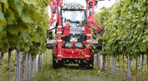 recoltarea automatizata a strugurilor